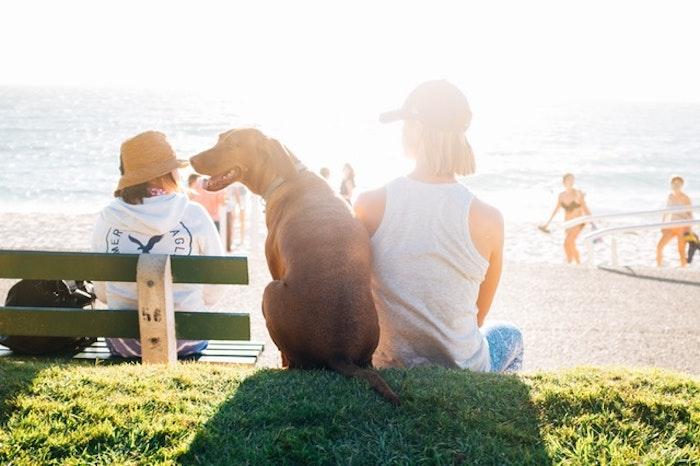 海岸に座る犬と女の子