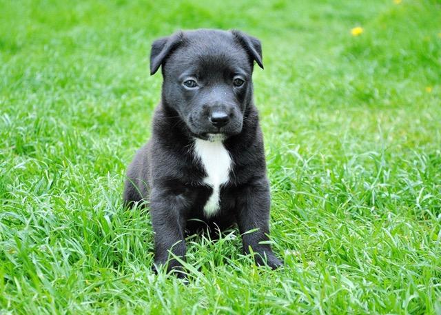 草むらにいる黒い犬
