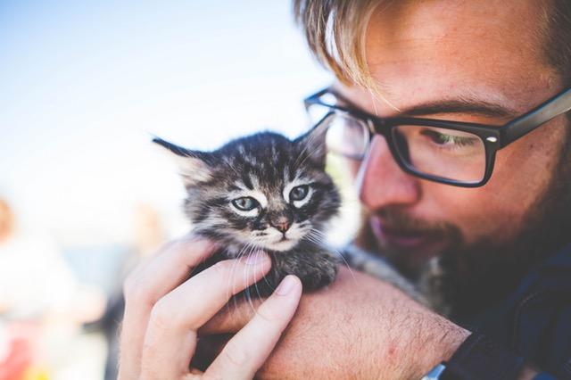 子猫と外国人