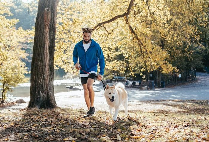 首輪,ハーネス,散歩,犬,グッズ,おすすめ,選び方