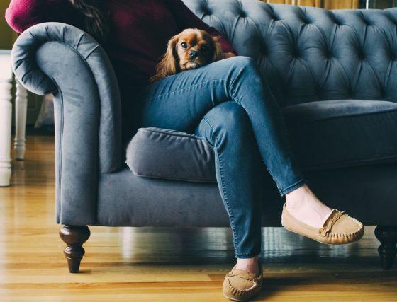 ソファにペットと一緒に座る女性