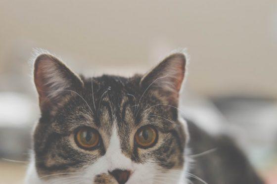 こちらをみてる猫