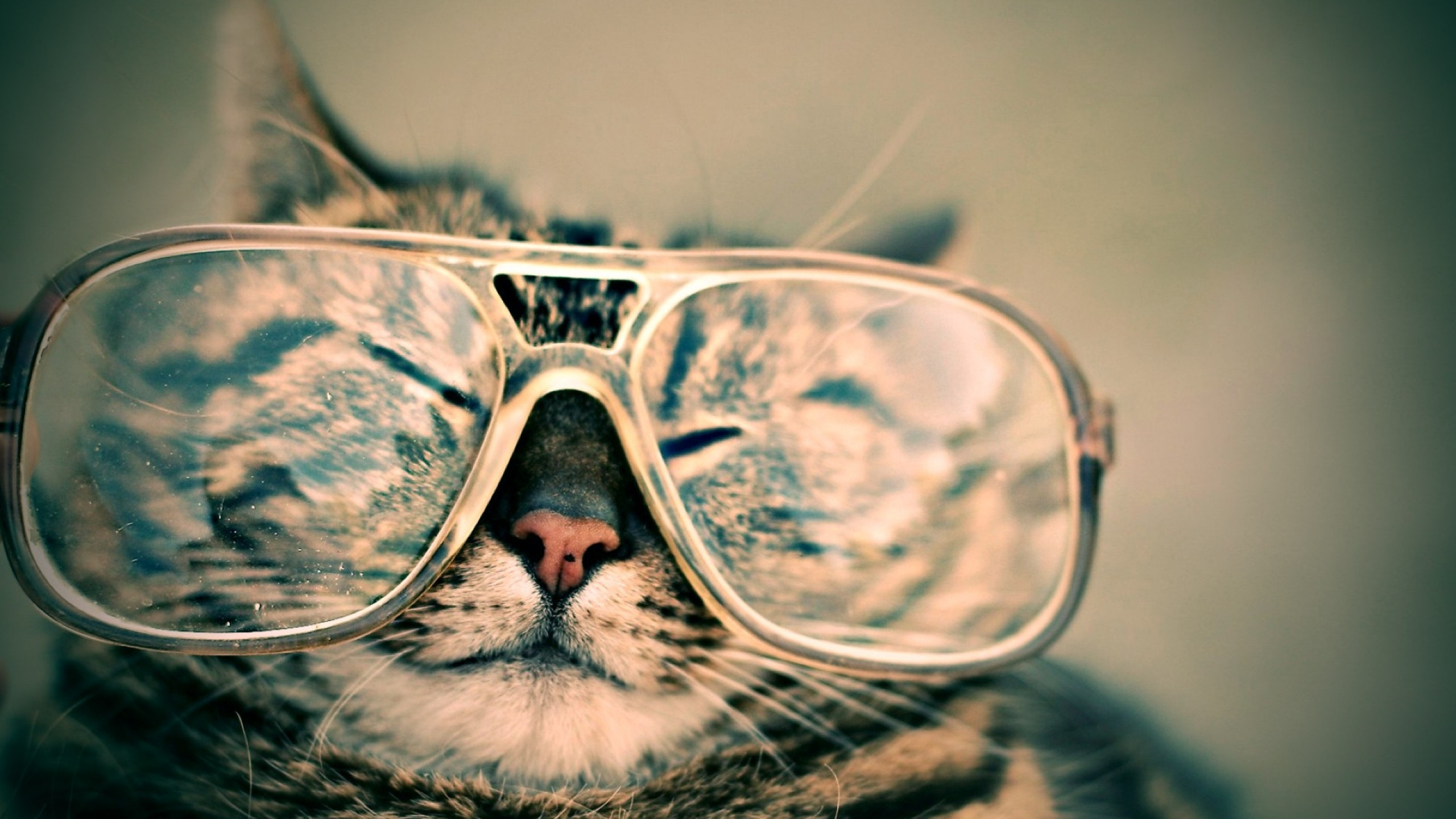 メガネをかける猫