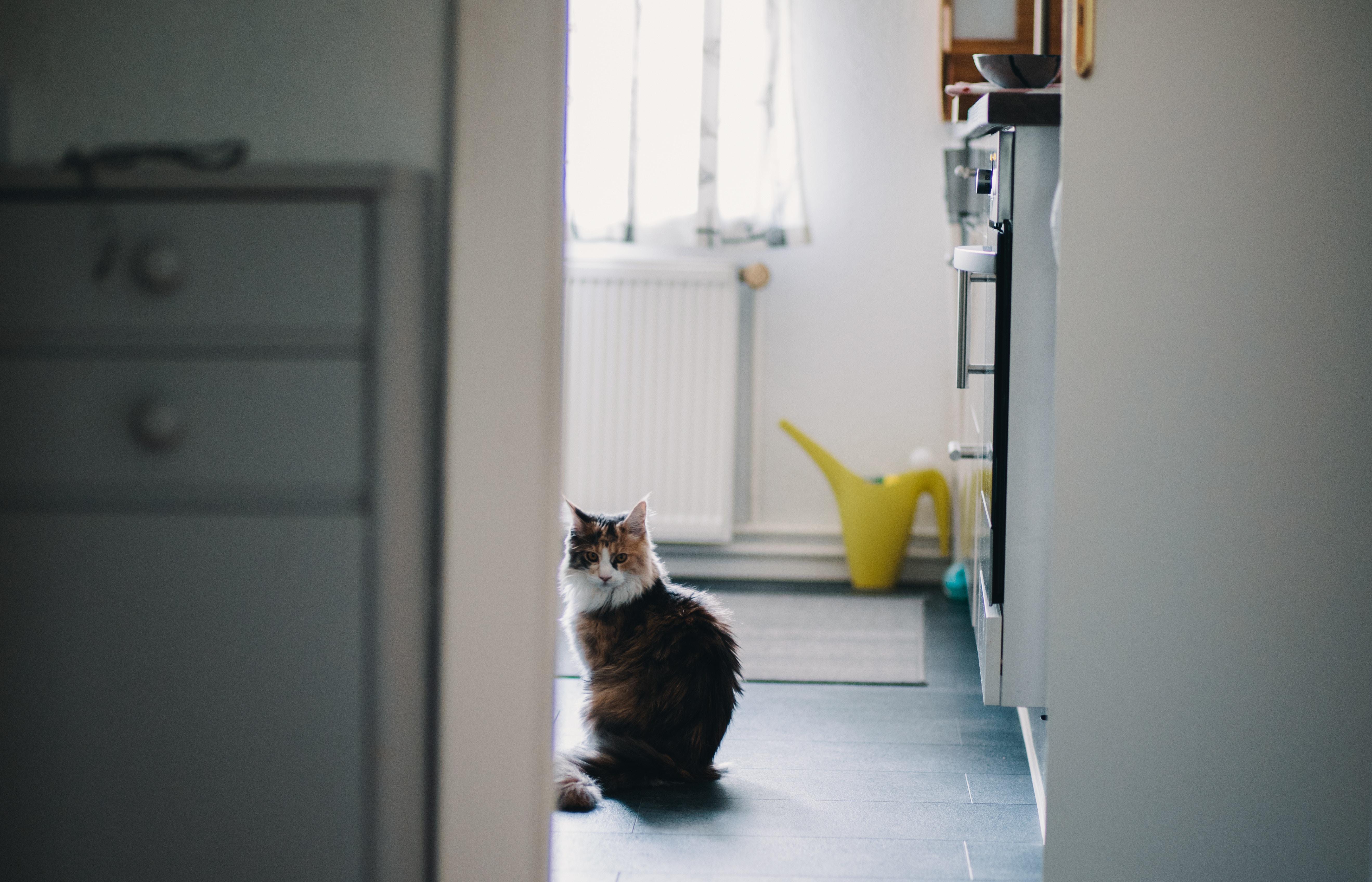 猫 こっち見てる