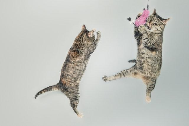 飛んで遊ぶ猫たち