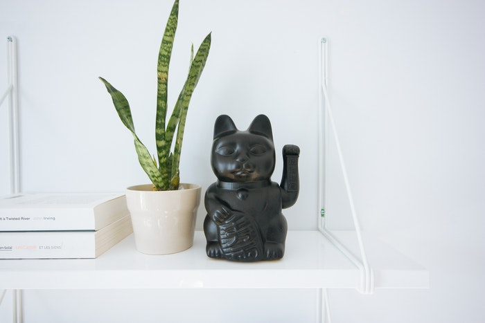 猫と観葉植物には相性があるので注意しよう