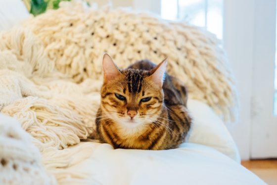 ベッドで眠る猫