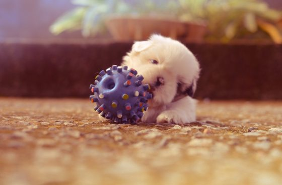 ボールと子犬