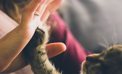 猫にも人にも過ごしやすい環境に!