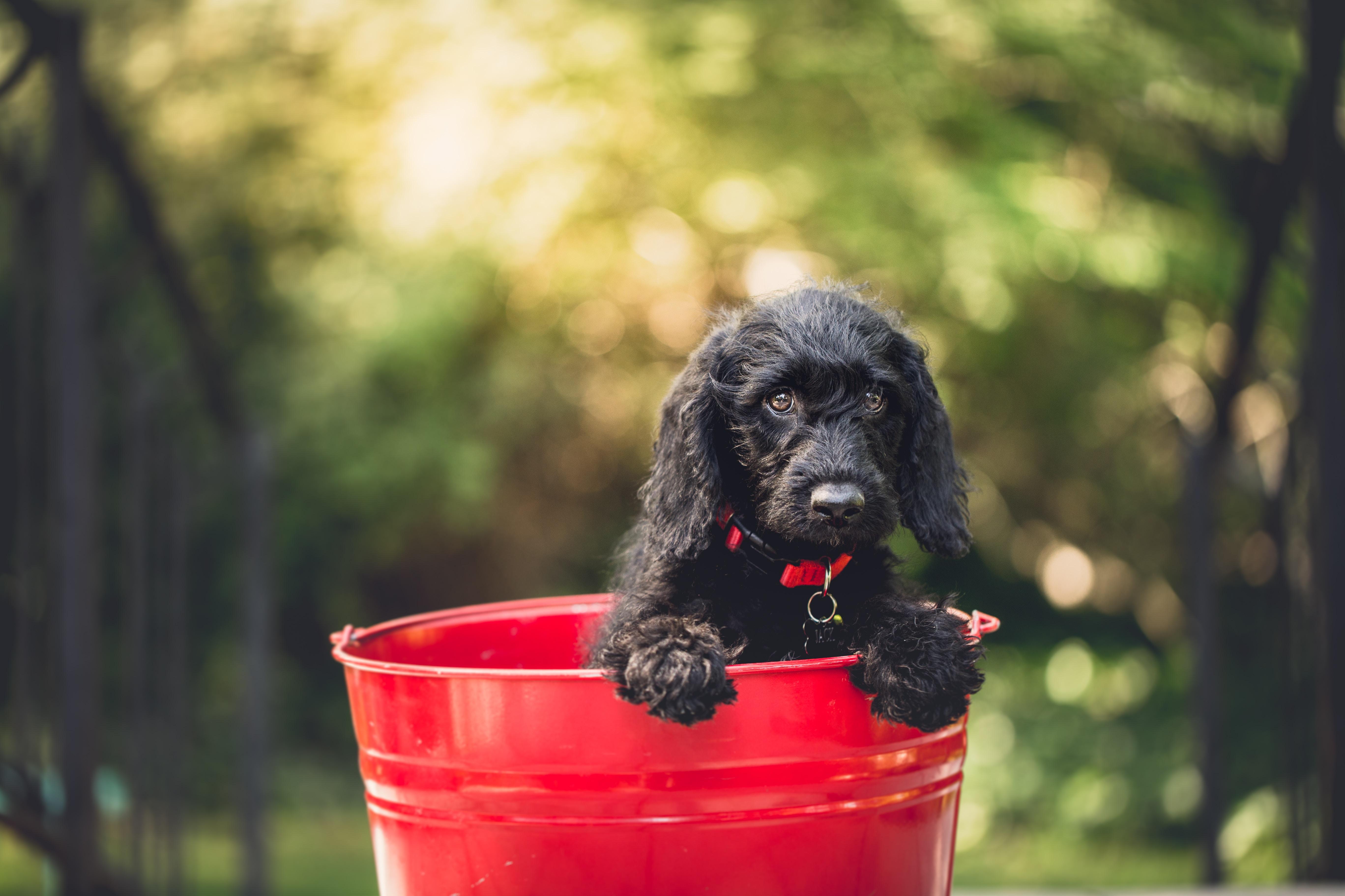 赤い缶に入っている、黒い犬