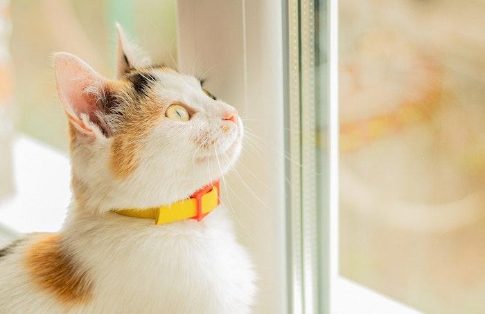 猫,外,見てる,見る,眺める,みる,みてる,窓,鳴く,獲物,出す,出たい,完全室内飼い,室内飼い,可哀想,かわいそう,ストレス,外飼い,日向ぼっこ,縄張り,監視