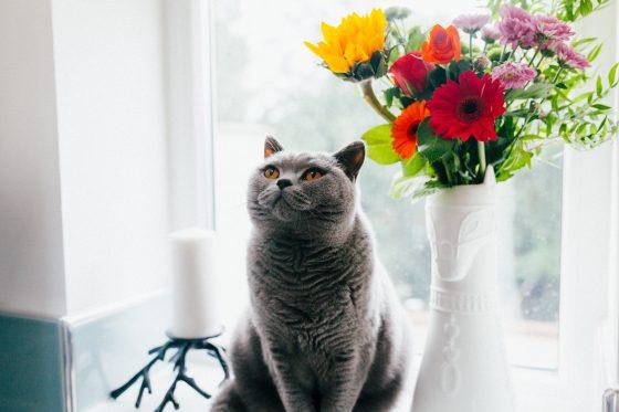 猫、花瓶と共に。