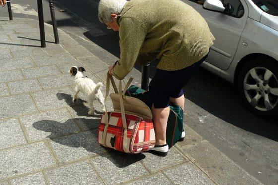 おばさんと犬