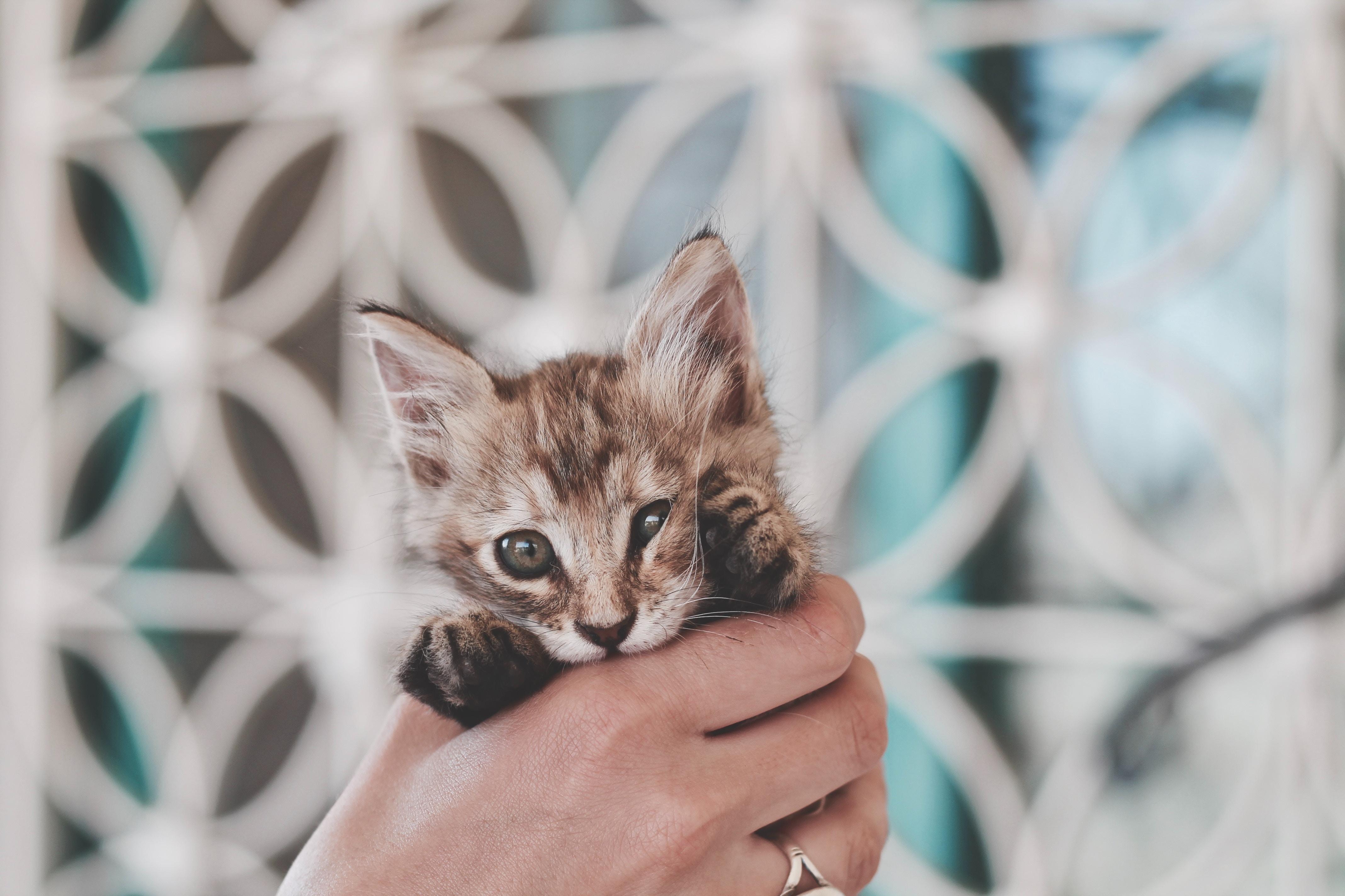 掴まれてる猫