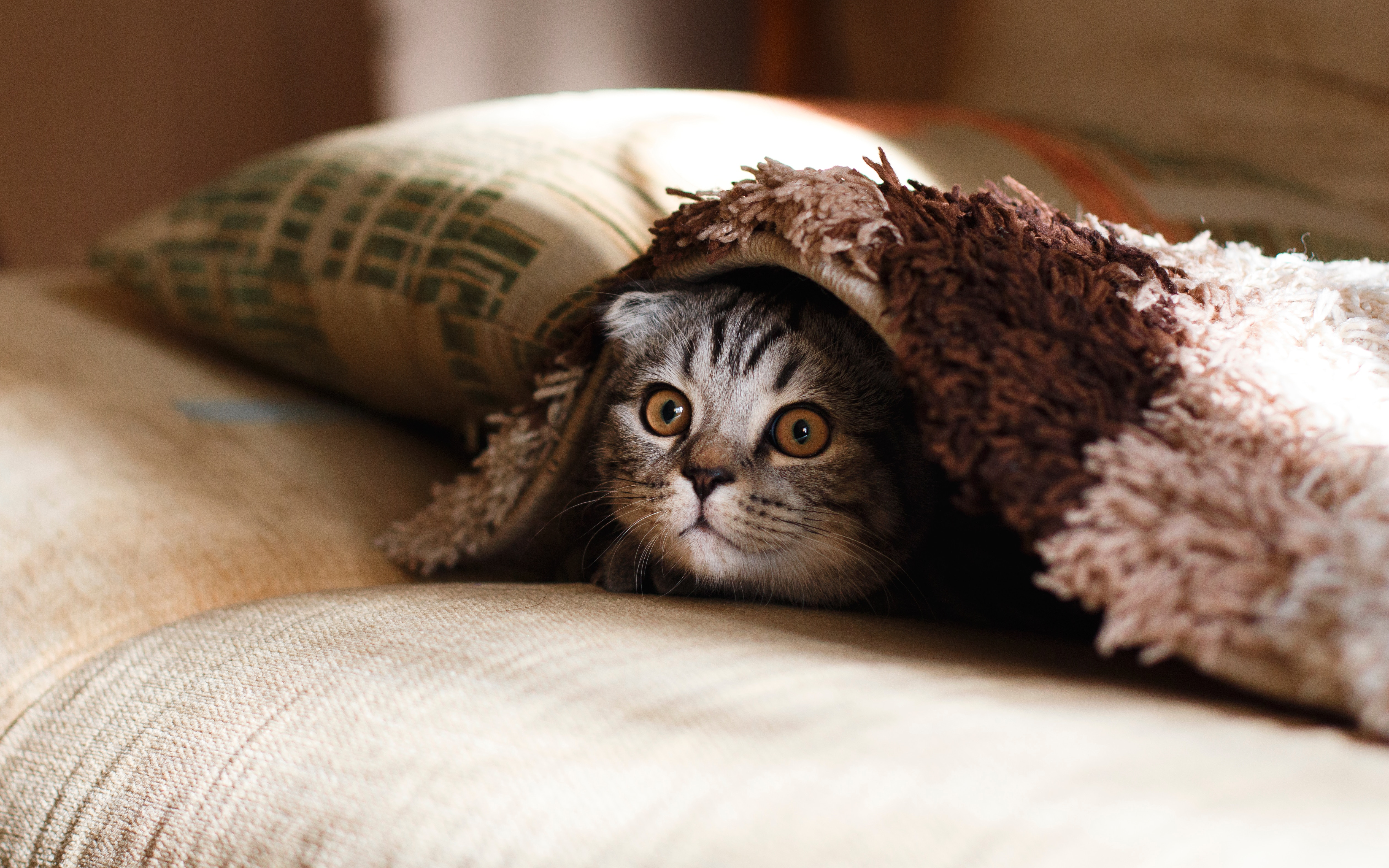 布団から顔を覗かせる猫