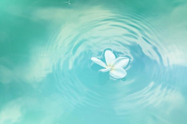 清潔さを思わす水に浮かぶ花
