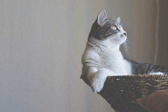 キャットタワーで休まる猫