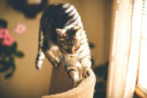 飛び乗ってる猫