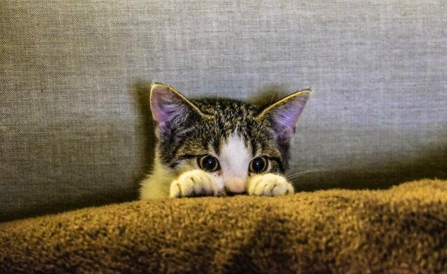ひょこっと顔出す猫