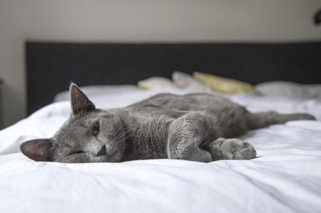 白いベッドに寝る猫