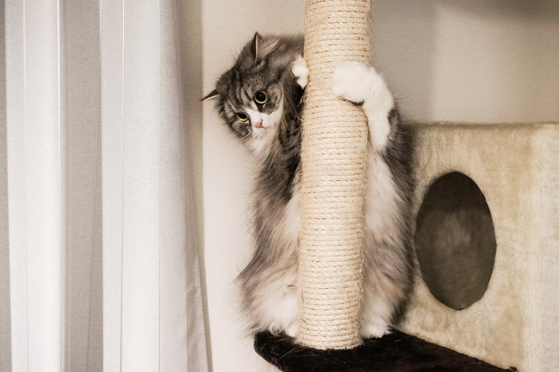 キャットタワー、麻縄の爪とぎにしがみつく猫