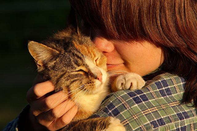 猫,ボディランゲージ,機嫌,好き,信頼,仕草,尻尾,ヒゲ,耳,口,目顔,表情