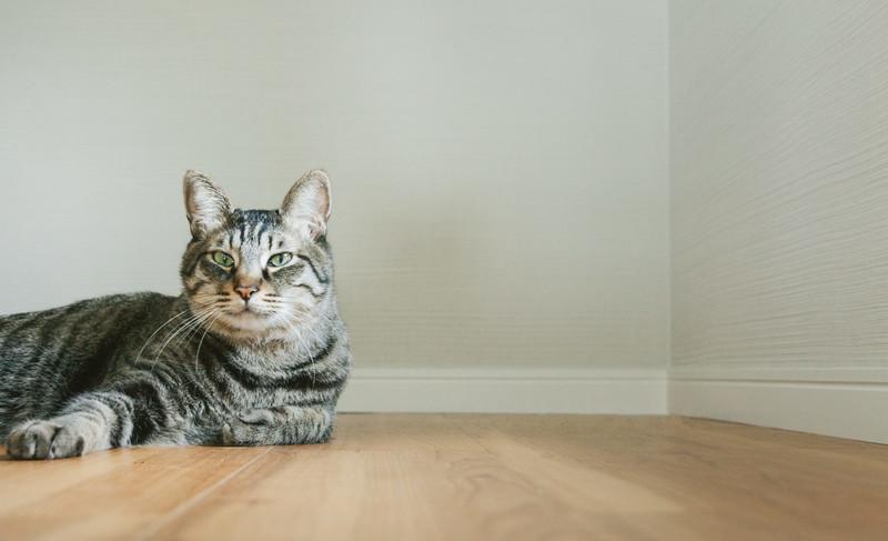 猫だけど質問ある?