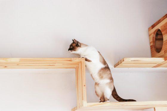 キャットステップを上がる猫
