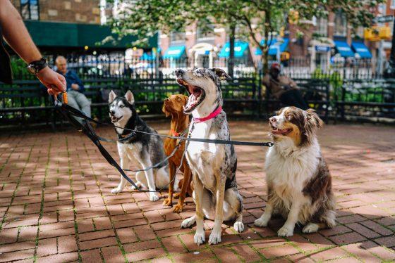 犬がたくさん、多頭飼い