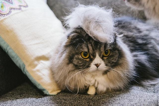 猫の毛が付かない服 猫 毛 つきにくい 素材 服