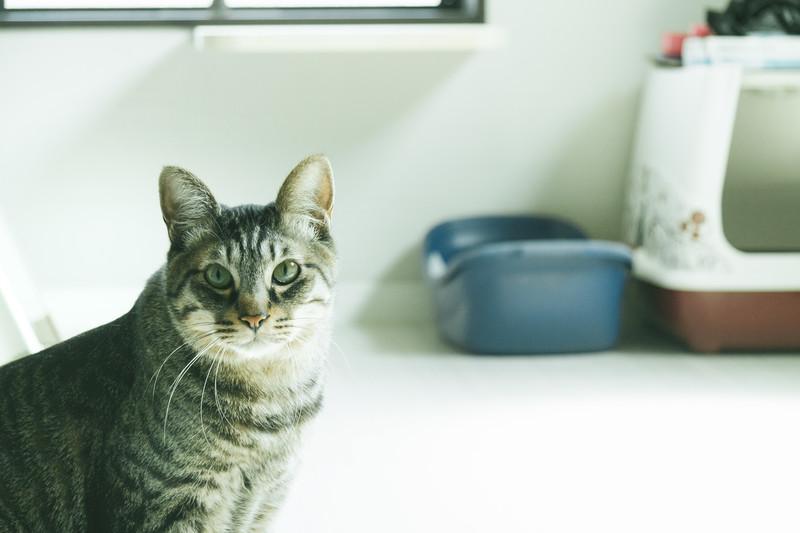 ご主人の異変を察する猫