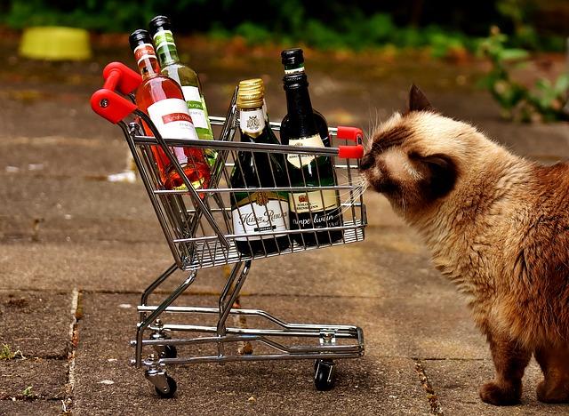 猫とショッピングカート