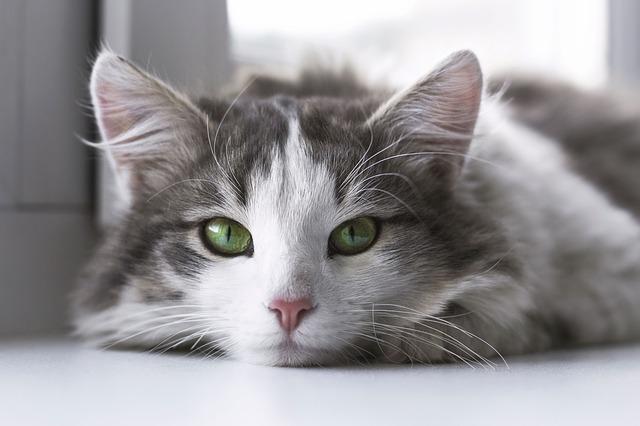 猫かわいい目