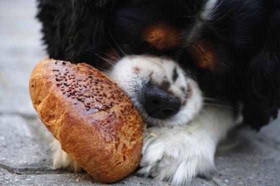 パンを食べる犬