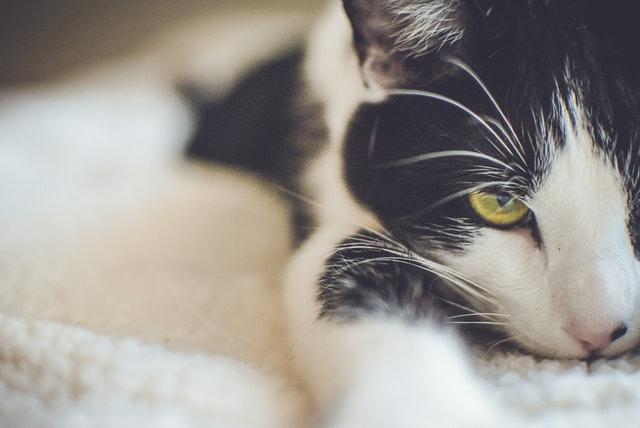 ドアップ猫