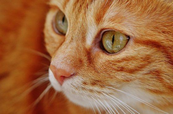 猫の顔・目ドアップ