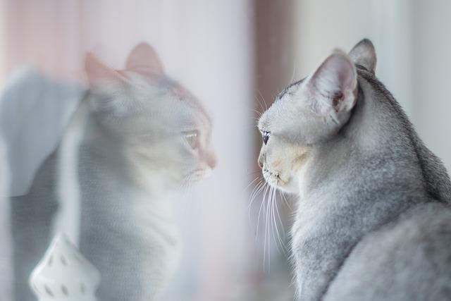窓に映る猫