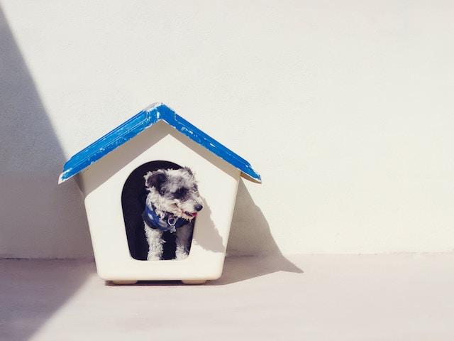 犬小屋に入る犬