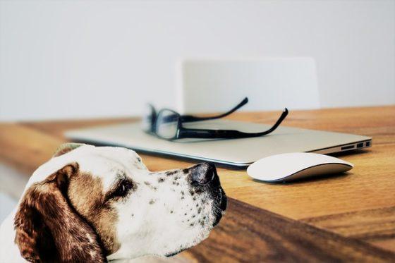 愛犬と一緒に働く環境