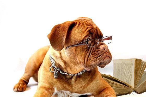 ポイントを教える犬先生