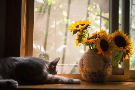 花瓶の隣で窓の外を眺める猫
