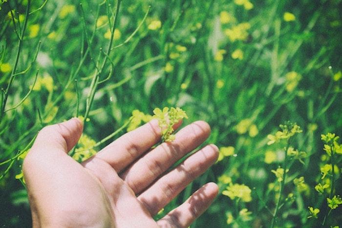 きれいな花が咲いていても草むらに入ることは花粉症対策の意味からもNGです