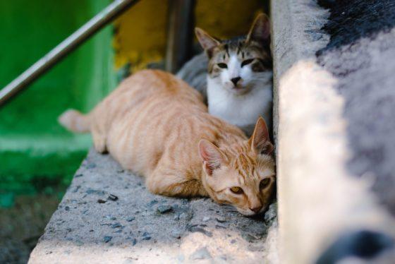 屋外の野良猫階段でうずくまる