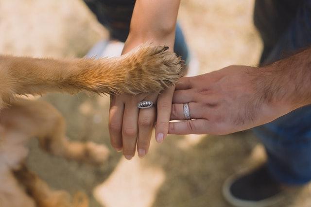 犬の手、人の手