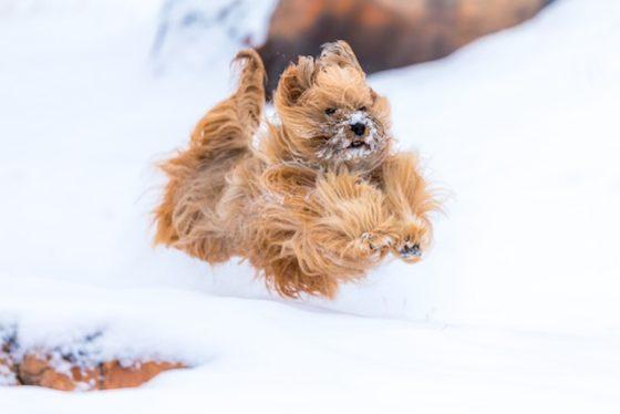犬の冬のお散歩でも工夫しよう