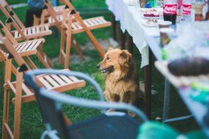 garden-party dog