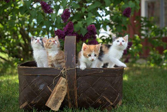 カゴに猫がいっぱい