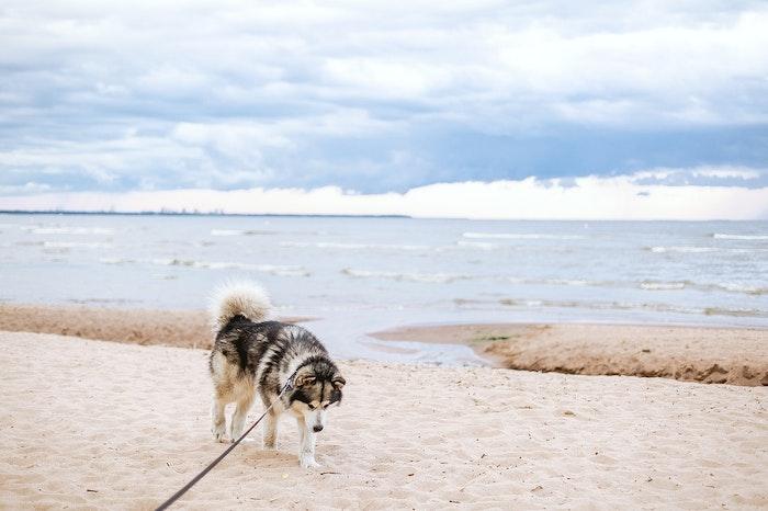 犬,海,ビーチ,お出かけ,注意点