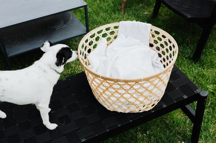 犬,洗濯,洗濯物,タオル,洗い方,臭い,洗濯機,洗剤,毛