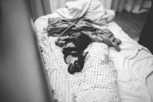 room dog